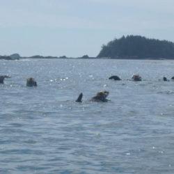 Nuchatlitz with Blue Dog Kayaking